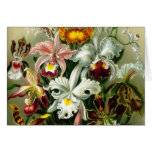 Orchidae Greeting Cards