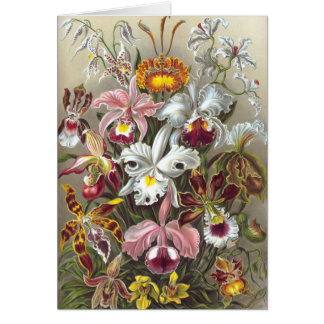 Orchidae (Orchids), Ernst Haeckel Greeting Card