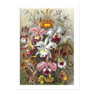 Orchidae (orquídeas), Ernst Haeckel Postal