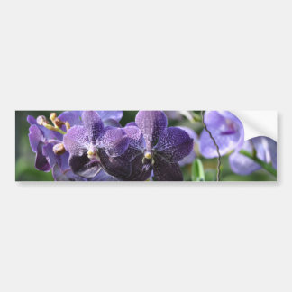 Orchidae purple bumper sticker