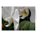 orchidee03 greeting card