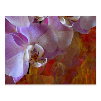 Orchidelia Gorgeous Orchids Abstract Postcard