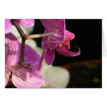 Orchids 01 greeting card