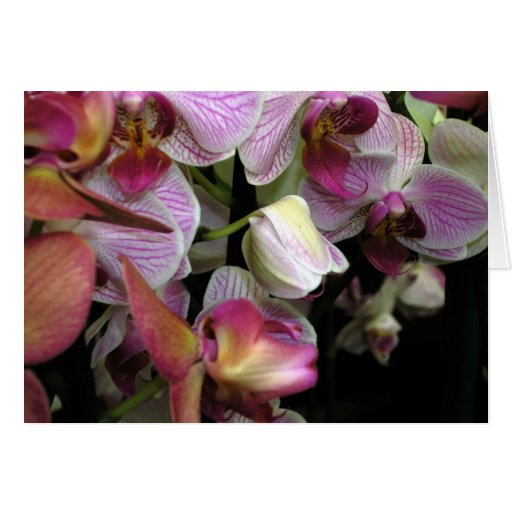 Orchids 02 cards