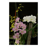Orchids 02 posters