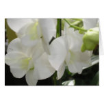 Orchids 04 greeting cards