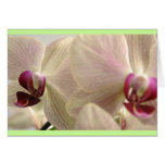 Orchids #1 cards
