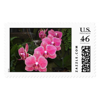 Orchids 30 postage stamps
