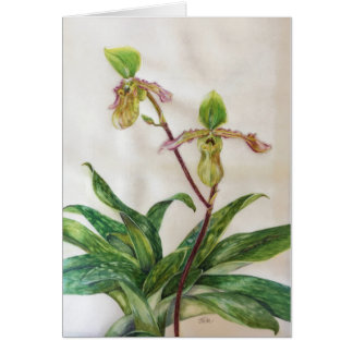 """Orchids (5"""" x 7"""") white envelopes include card"""