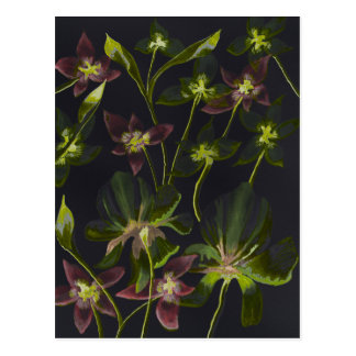 Orchids and Lilies Reverse Abstract Postcard