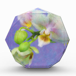 Orchids Award