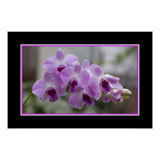 Orchids Bloom Poster