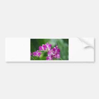 orchids bumper sticker