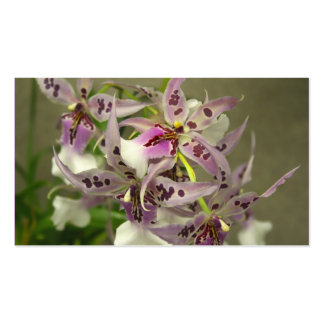 Orchids business cards