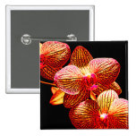 Orchids Buttons