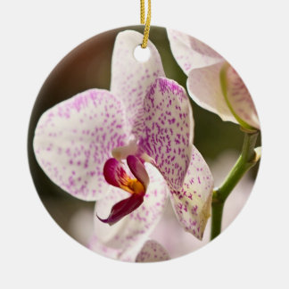 Orchids by Shirley Taylor Ceramic Ornament