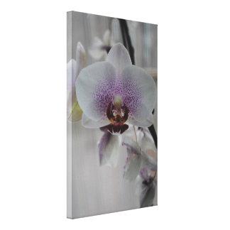 Orchids (Canvas) Canvas Print