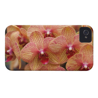 Orchids Case-Mate iPhone 4 Cases