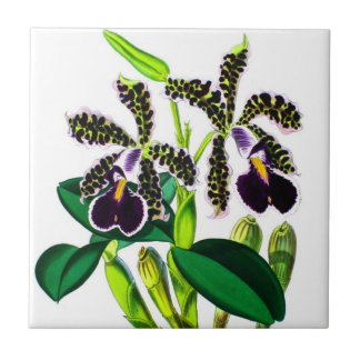 Orchids Ceramic Tile