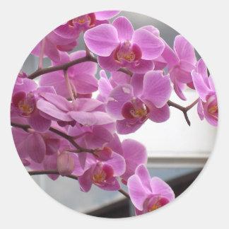 Orchids Classic Round Sticker