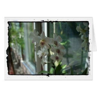 Orchids close up -  fine art photographic print card