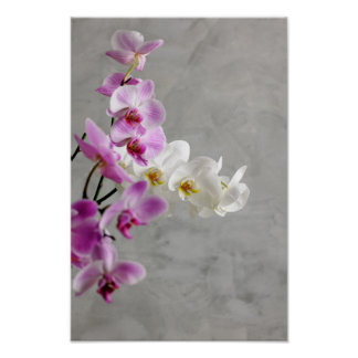 Orchids close up poster