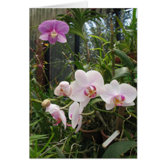 Orchids - Customized Card