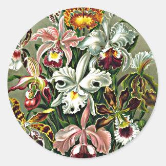 Orchids - Ernst Haeckel artwork Orchidae Stickers