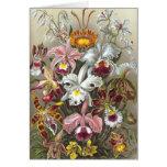 Orchids Ernst Haeckel Fine Art Card