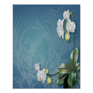 Orchids & Ferns Poster