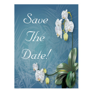Orchids & Ferns Wedding Svae The Date Postcard