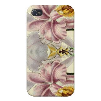 Orchids floral iPhone case for Orchidaceae fans iPhone 4/4S Case