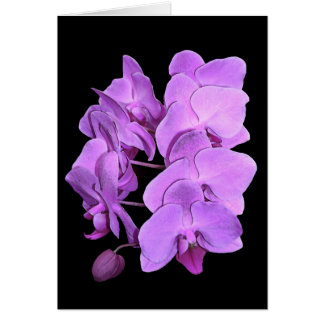 orchids (fresco style) card