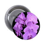 orchids (fresco style) pinback buttons