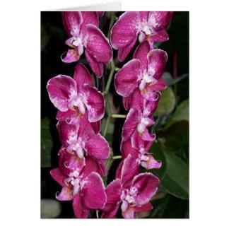 Orchids-Fuschia I Card