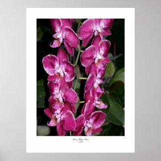 Orchids-Fuschia I Poster