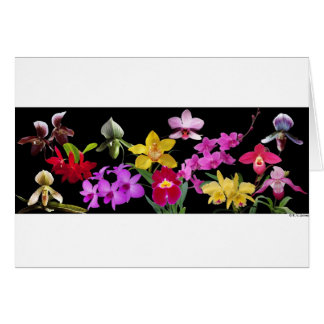 Orchids galore card