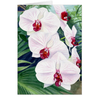 Orchids, greeting card