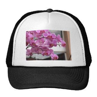 Orchids Trucker Hats