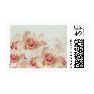 Orchids in full bloom Postage