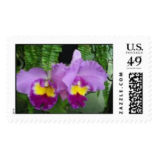 Orchids in Love Stamp