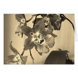 orchids in sepia tone greeting card
