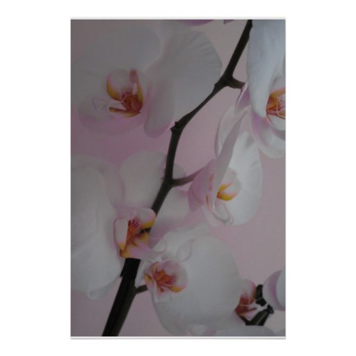 Orchids in Winter Poster