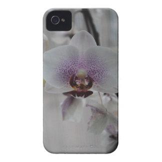Orchids (iPhone Case) iPhone 4 Case-Mate Case
