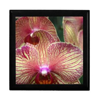 Orchids Jewelry Box/Large Gift Box