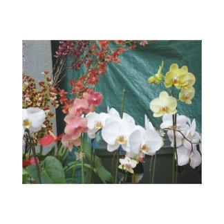 Orchids.jpg Canvas Print