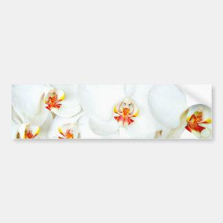 Orchids Love_ Bumper Sticker