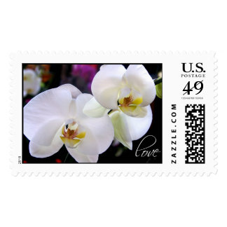Orchids Love Wedding Flower Postage Stamps