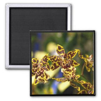 Orchids magnet