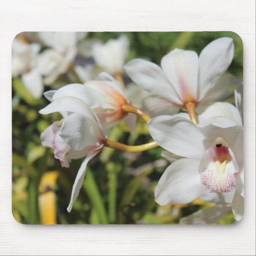 Orchids Mouse Pad